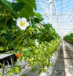 Greenhouse feature image