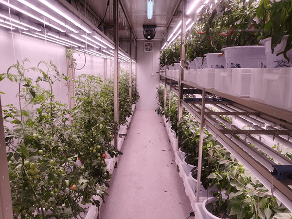 container farming image 1