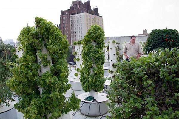 Utilize hydroponic system to build roof agriculture