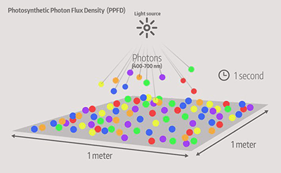 Photosynthetic-Photon-Flux-Density-PPFD