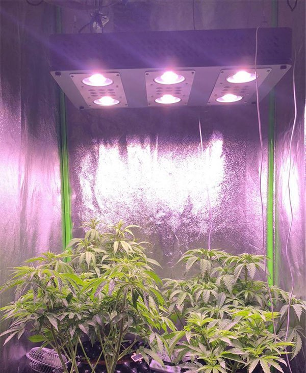 Cannabis Led Grow Light