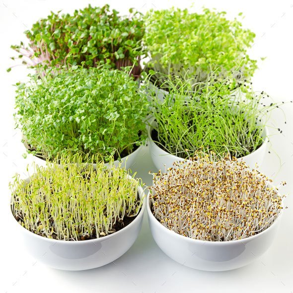 Everythings You Want To Know About Microgreens