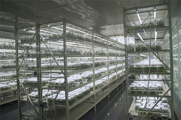 China Shandong Tissue culture image 1