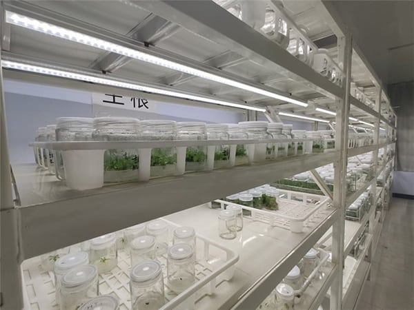 China Shandong Tissue culture image 2