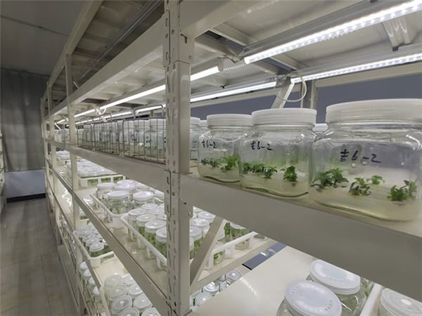 China Shandong Tissue culture image 3
