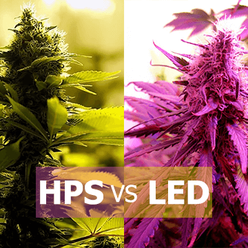 Lighting in the cannabis cultivation HPS Vs LED