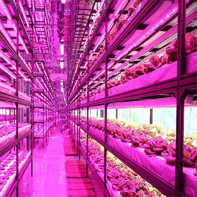 National Agricultural Science and Technology Demonstration Park vertical farming feature image
